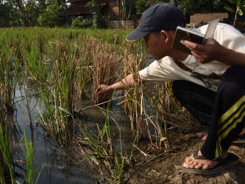 Petani Sebagai Pengamat, Pemerhati Iklim: Refleksi 8 Tahun APCH Indramayu