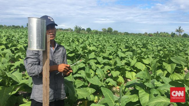 CNNINDONESIA.COM – Centong, Penolong Petani Biar Untung